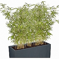 Mobilier EHPAD - Plante Naturalisée bambou-DECORATI-POT-Plante-Naturalisee-bambou_1_20171107182547.jpg